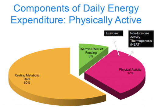 Daily Energy Expenditure Active