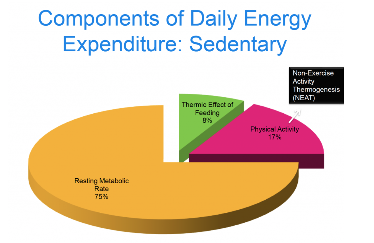 Daily Energy Expenditure Sedentary