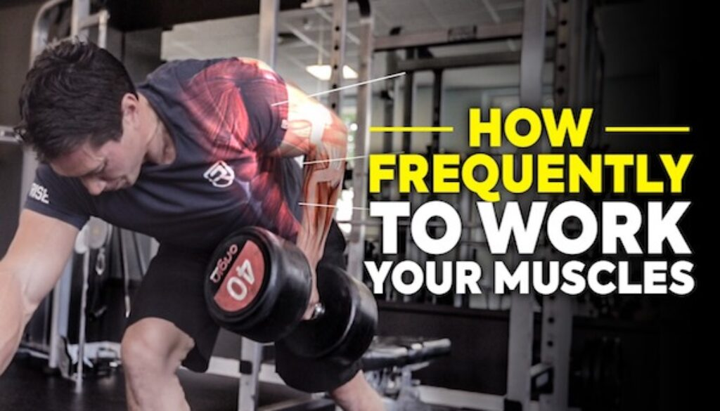 How often you should work each muscle